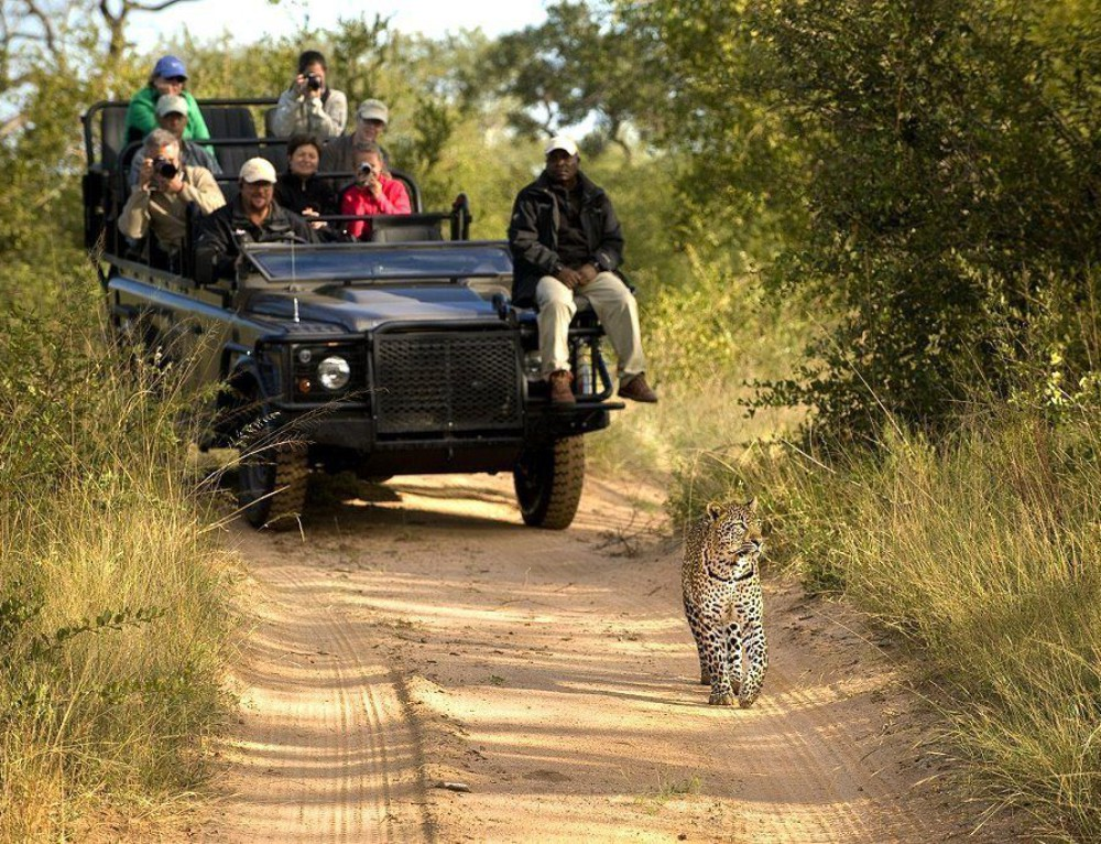 Recommended Safaris and Tours