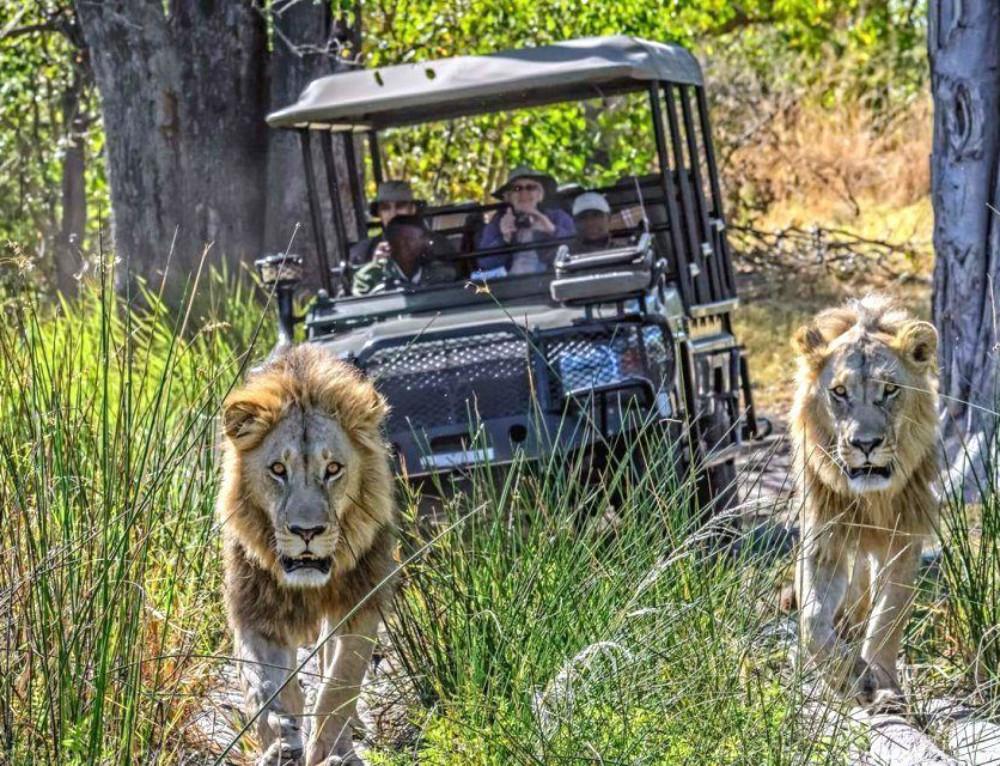 Best of Botswana Safari