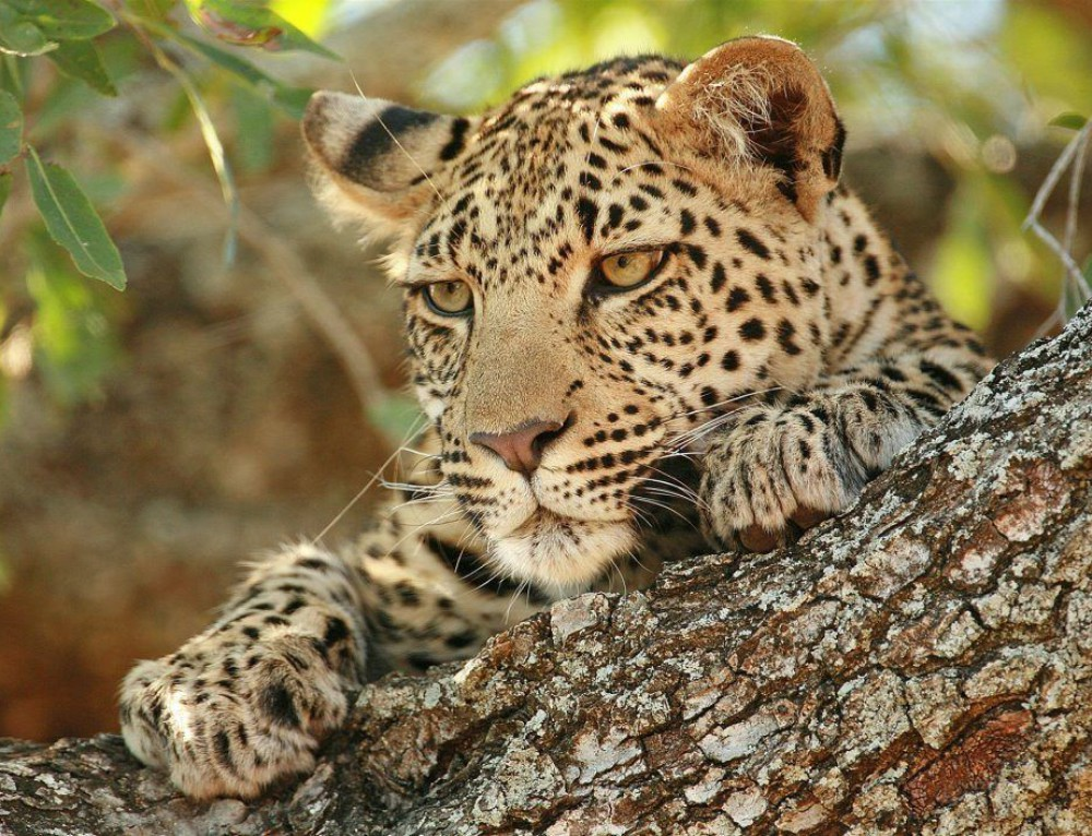 Botswana Highlights Safari