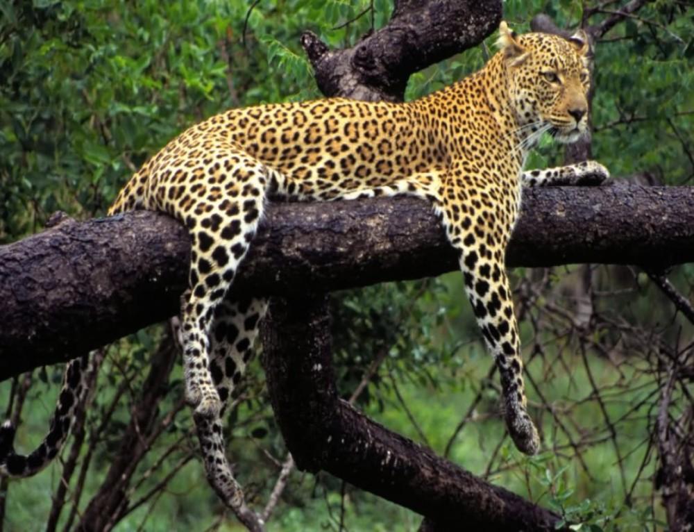 Wild and Scenic Mpumalanga