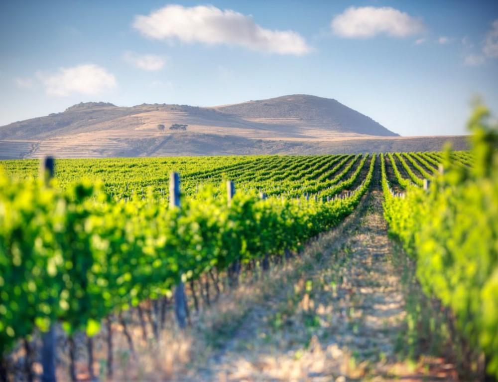 Winelands and West Coast Wonders