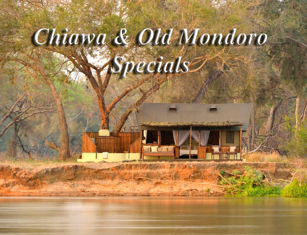 Chiawa and Old Mondoro Specials