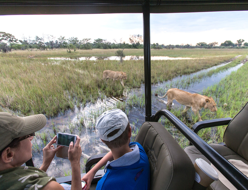 Safari Professionals