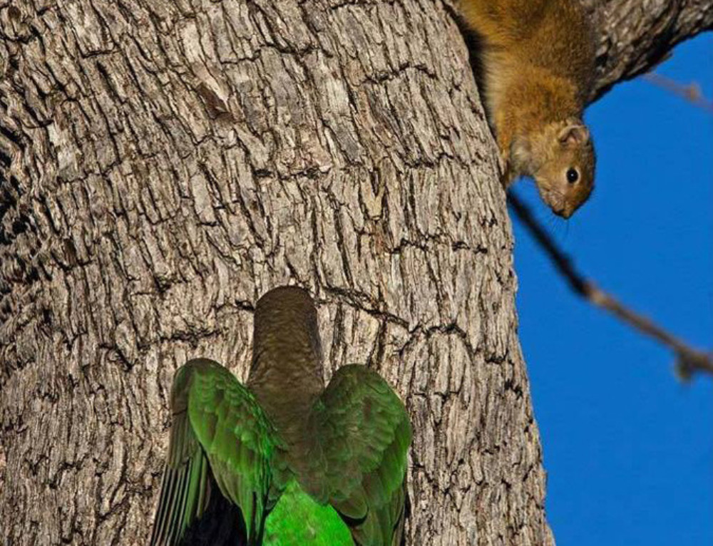 Titanic battle between squirrel and parrot