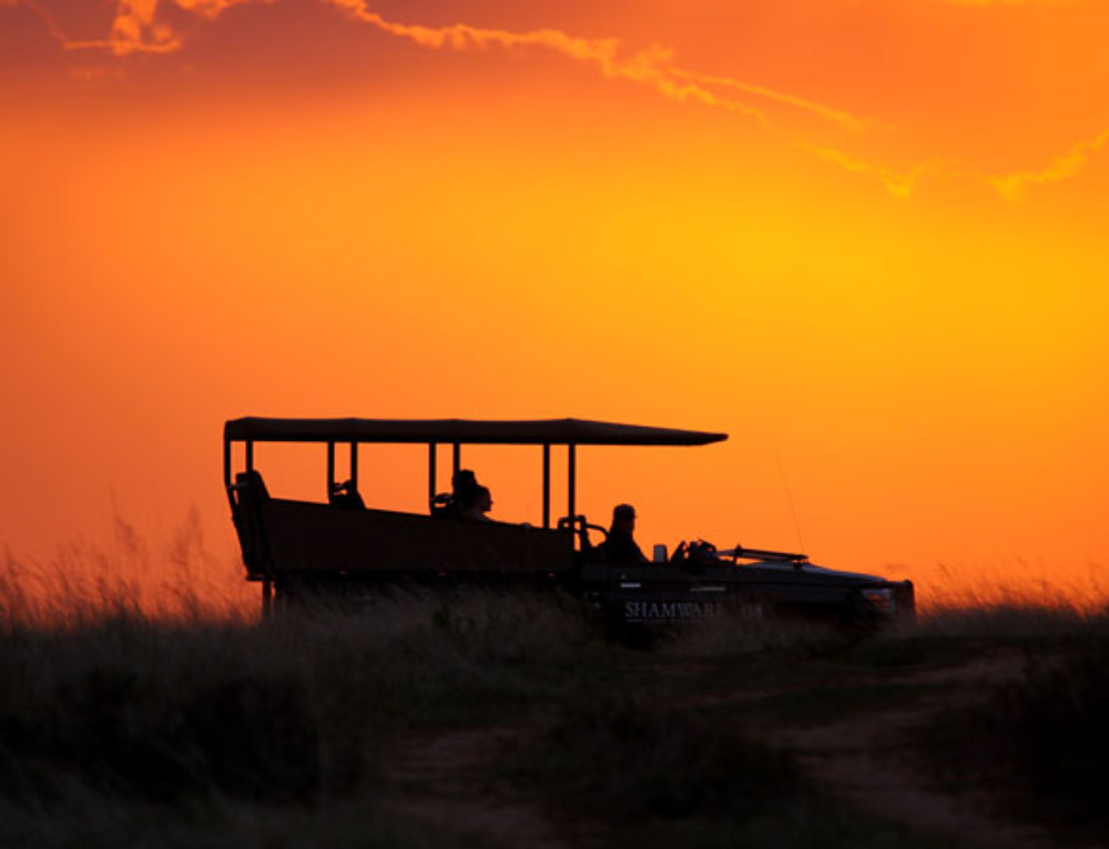 Top tips for going on game drives