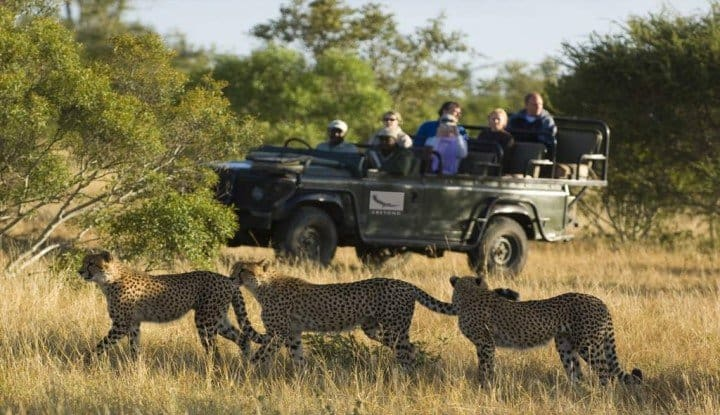 Kruger Park Luxury Safari (4 Days) | African Safaris with Taga