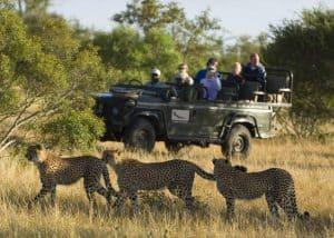 Kruger Park Luxury Safari (4 Days) | African Safaris with Taga