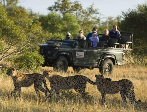 Kruger Park Luxury Safari (4 Days)