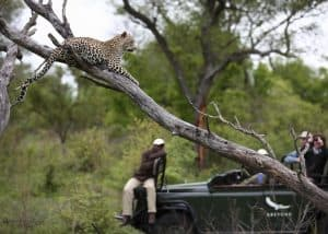 Kirkmans and Benguerra (8 Days) | African Safaris with Taga