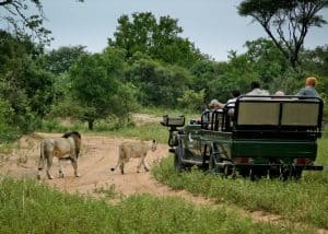 Phinda and Benguerra (8 Days) | African Safaris with Taga