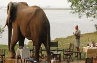 Zambia Safaris | African Safaris with Taga