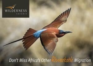 Summer Season | African Safaris with Taga
