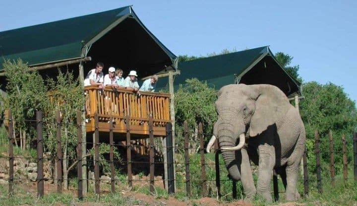 Addo to Cape Town (4, 5 & 6 Days) | Taga Safaris - An African Safari with the Pioneers