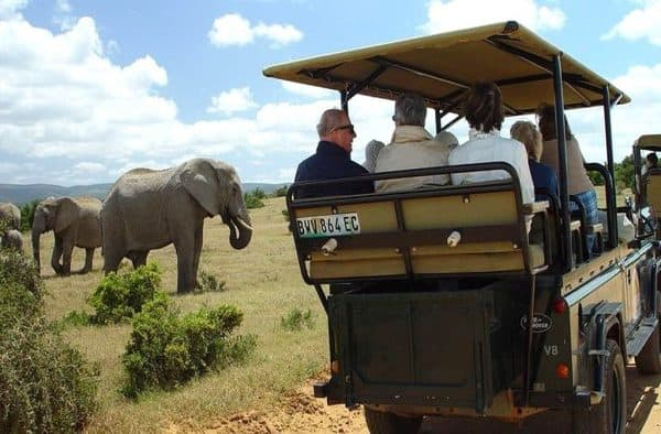 Featured Day Addo to Cape