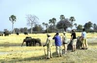 Zimbabwe Safaris | African Safaris with Taga