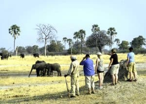 Hwange Walking Safari | African Safaris with Taga