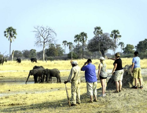 Hwange Walking Safaris