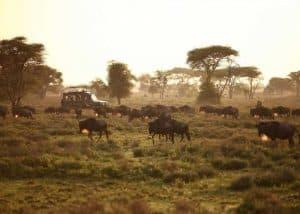 Treasures of Tanzania Safari | African Safaris with Taga