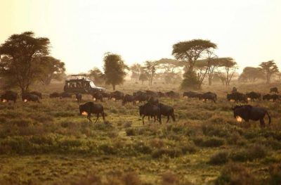 Luxury Safaris