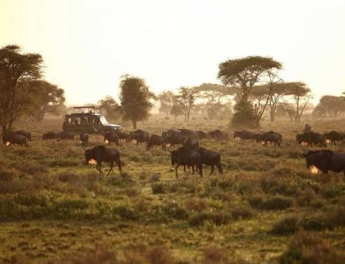 Treasures of Tanzania Safari