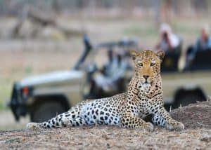 Wild and Luxurious Southern Africa | African Safaris with Taga
