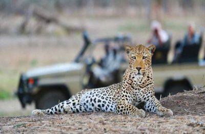 Wild and Luxurious Southern Africa | African Safari with Taga