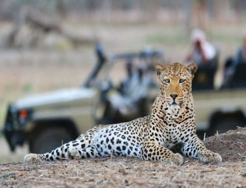 Wild & Luxurious Southern Africa