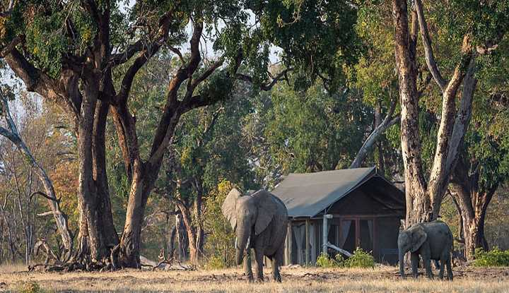 Hwange Walking Safari