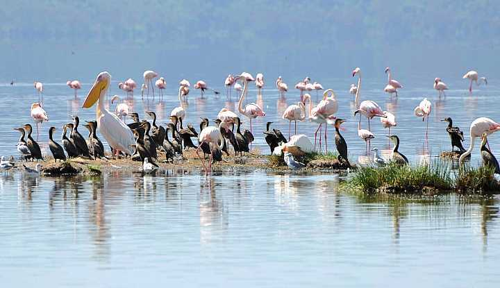 Kenya and Tanzania Tour (12 Days ) | Taga Safaris