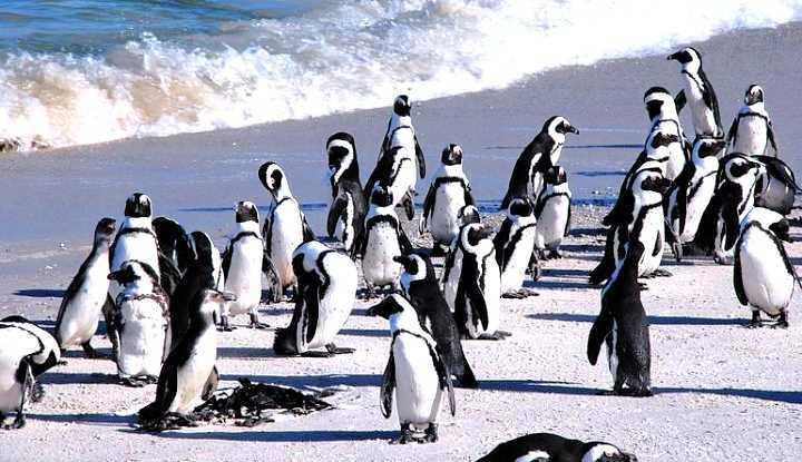 Cape Peninsula Tour (FD) | African Safaris with Taga