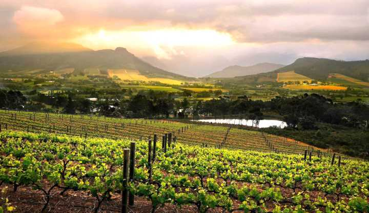 Classic Winelands Tour