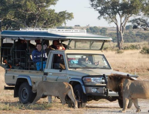Botswana Accommodated Tour (16 Days)