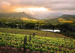 Classic Winelands Tour (FD) | African Safaris with Taga
