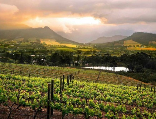 Cape Winelands Tour (FD)