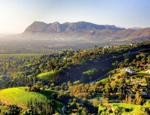 Constantia Winelands (HD)