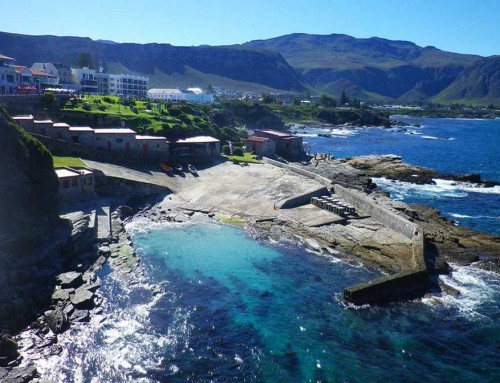 Hermanus & Dyer Island Cruise (FD)