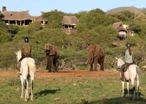 Horseback Safaris and Big 5 | African Safaris with Taga