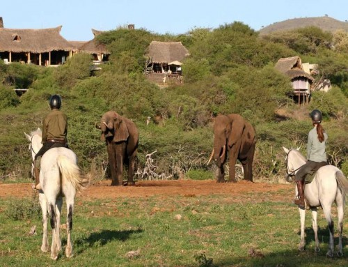 Kenya Horseback Safaris and Big 5