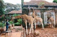 Kenya Safaris   African Safaris with Taga