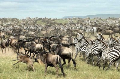 Migration, Lake and Crater Safari | African Safari with Taga