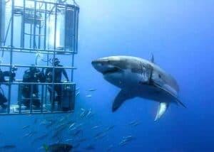 Cape Peninsula & Shark Safari - AM (FD) | African Safaris with Taga