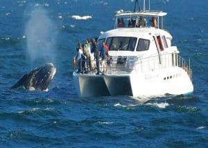 Peninsula & Whale Watching (FD) | African Safaris with Taga