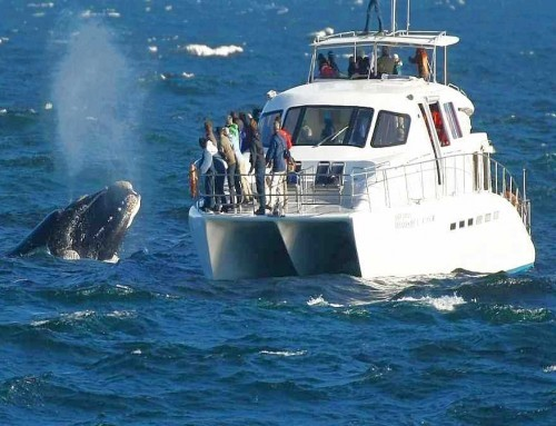 Cape Peninsula & Whale Watching (FD)