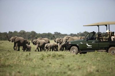 Short and Sweet Masai Mara | African Safari with Taga