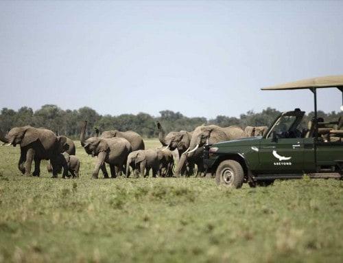 Short and Sweet Masai Mara