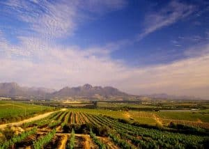 Stellenbosch Winelands (HD) | African Safaris with Taga