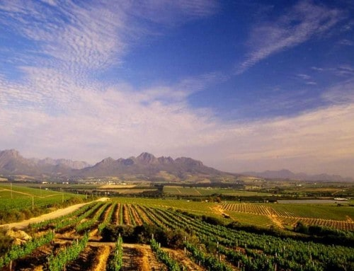 Stellenbosch Winelands (HD)