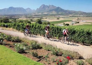 Winelands & Cycling (FD) | African Safaris with Taga