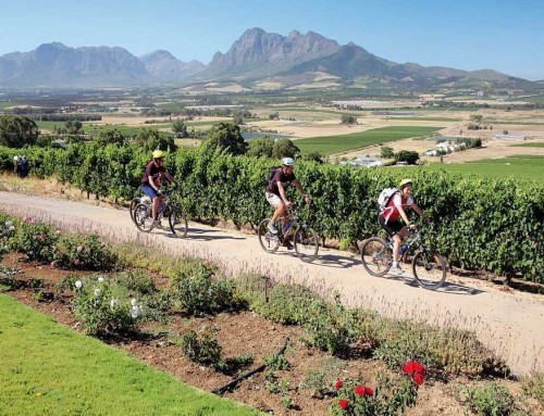 Cape Winelands Cycling (FD)