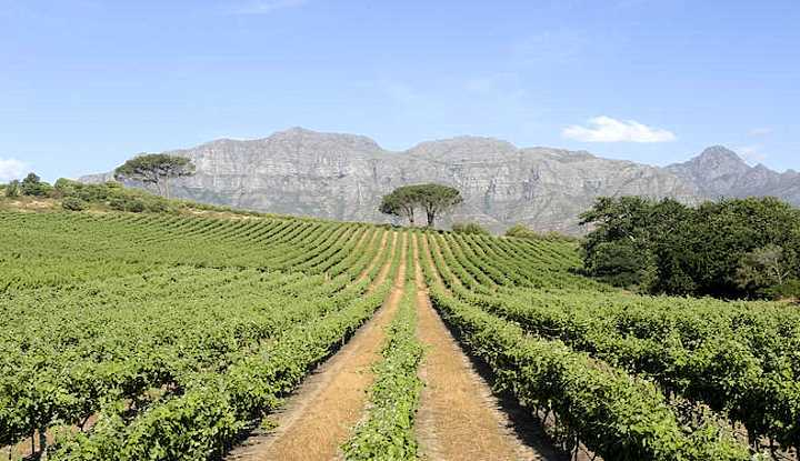 Grand Slam Cape Peninsula and Winelands Tour (FD) | Taga Safaris - An African Safari with the Pioneers